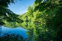 青森県 十二湖 鶏頭場の池