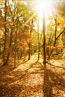 木漏れ日の紅葉の雑木林