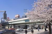 東京都 桜咲く日本橋