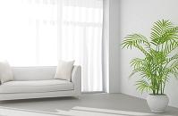 白いソファと観葉植物が置かれたリビング CG