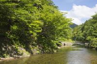 青森県 緑生い茂る薬研渓流の風景