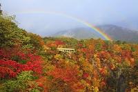 宮城県 鳴子峡 虹と紅葉 朝