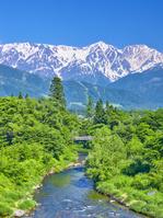 長野県 新緑の大出の吊橋