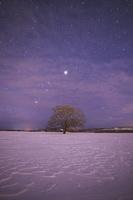 北海道 はるにれの木と星