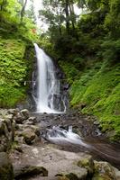 福井県 緑生い茂る初夏の一乗滝