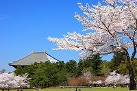 奈良県奈良市 奈良公園