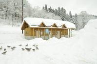 雪に覆われた公衆トイレ