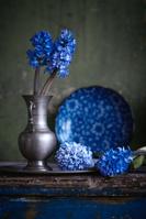 青色のヒヤシンス