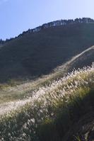 奈良県 曽爾高原 すすき