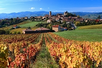 フランス ボジョレー ブドウ畑