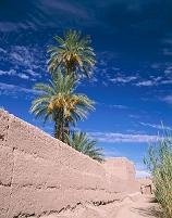 モロッコ カスバ街道 日干しレンガ塀 ナツメヤシ