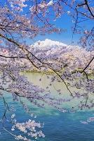 青森県 弘前城の桜と岩木山