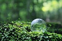 森の中の切り株に置かれた地球儀