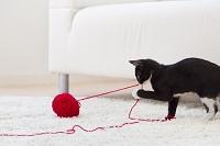 毛糸を引っ張る猫