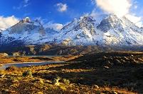 チリ パイネ国立公園 キツネ