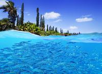 ニューカレドニア イル・デ・パン島 ササムロの群れ/カヌメラ湾...
