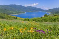 群馬県 アヤメとノゾリキスゲ咲く野反湖