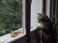 小鳥を見つめる猫