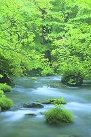 青森県 奥入瀬 三乱の流れ 新緑と流れ