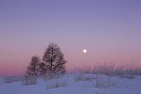 長野県 夜明けの満月と木立