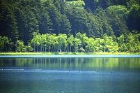 オンネトー湖畔とオシドリ