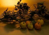 ヒイラギの枝とカボチャ