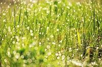 北海道 水滴輝く水草の彩