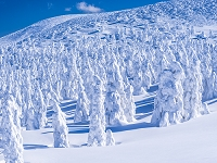 日本 山形県 蔵王 樹氷