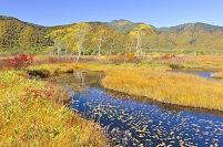 群馬県 尾瀬 中田代から望む池塘と紅葉の景鶴山