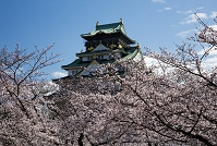 大阪府 桜咲く大阪城公園