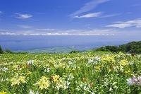 滋賀県 箱館山ゆり園