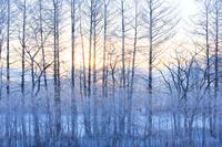 北海道 雪景色