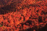 北海道 狩場山の峰越林道より賀老高原 ブナの樹海