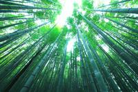 栃木県 那須町 芦野・唐木田の竹林