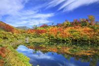 北海道 大雪高原の式部沼と緑岳