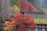 秋の香嵐渓 足助屋敷
