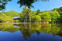 京都府 竜安寺 鏡容池