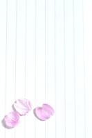 便箋とサクラの花びら