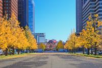 東京都 東京駅とイチョウ並木