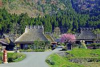京都府 美山かやぶきの里 春景色