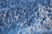 長野県 落葉松の霧氷