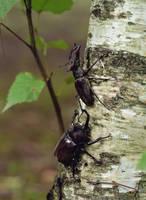 北海道 カブト虫とクワガタ虫