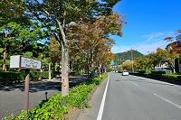 山口県 山口市 パークロード (日本の道100選)
