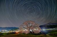 長野県 黒部のエドヒガン桜と星の光跡