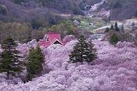 長野県 高遠閣