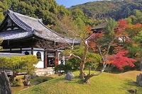 京都府 紅葉の高台寺 開山堂と臥龍廊と霊屋