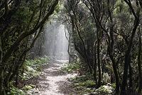 スペイン カナリア諸島 木のトンネル