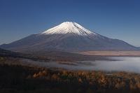 山梨県 カラマツの黄葉と富士山と山中湖をおおう雲海