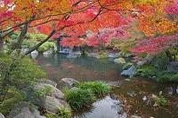 兵庫県 好古園 紅葉