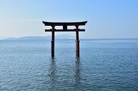 滋賀県 琵琶湖 白髭神社の鳥居